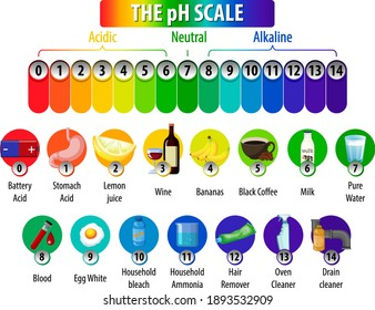 The pH Scale diagram on white background illustration