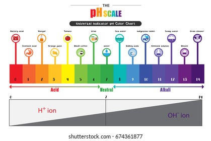 the ph scale universal indicator ph color chart diagram acidic alkaline  values common substances vector illustration