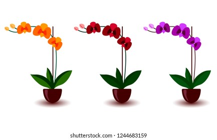 Phalaenopsis orchid pink violet lilac purple orange indoor houseplant. Set of three flowers with buds, green leaves, stem growing in clay pot. Botanical floral flat style vector illustration