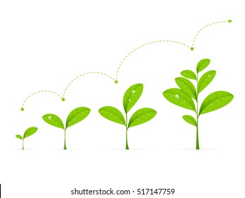 Phases Green Plant Growing. Concept Development Vector illustration of Seedling Agriculture or evolution concept