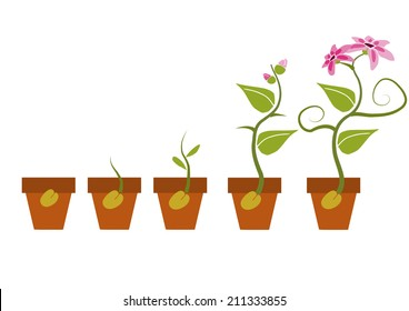 Phases of growth of a flower.