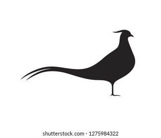 Pheasant silhouette. Isolated pheasant on white background