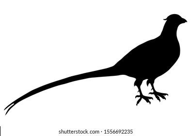 Pheasant Silhouette Vector Portrait black