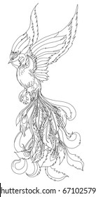 Phoenix Fire bird outline and doodle style.Hand drawn Phoenix tattoo Japanese and Chinese style,Legend of the Firebird is Russian fairy tales and it is creature from Slavic folklore.