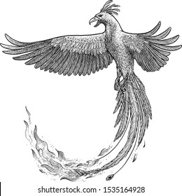 Phoenix illustration, drawing, engraving, ink, line art, vector