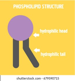 Phospholipid structure vector