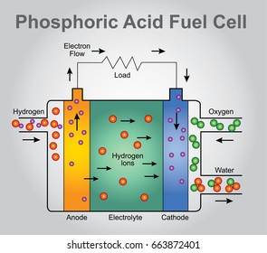 Phosphoric Acid fuel cell structure. Education technology info graphic vector.