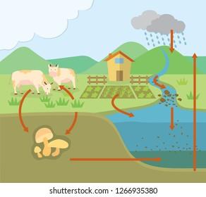 Phosphorus cycle chart, flat design
