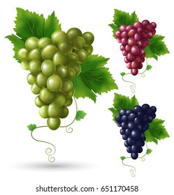 Photo realistic grape set. Full editable, isolated on white. Green grape, red grape, black grape.