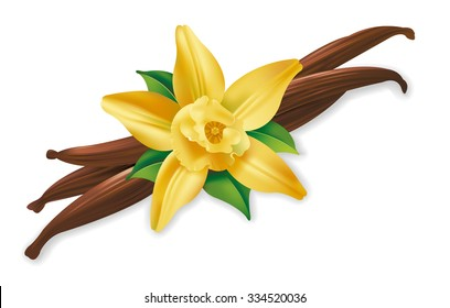 Photo realistic illustration of vanilla pods and flower on white background.