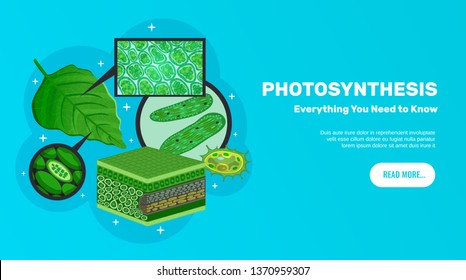 Photosynthesis basic information website horizontal banner design with green leaves cells chloroplasts chlorophyll structure background vector illustration