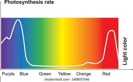 photosynthesis rate. light of different colors