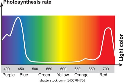 photosynthesis rate. photosynthesis rate speed