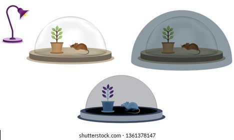 Photosynthesis test in bright environment and dark environment with closed glass fan. The relationship between photosynthesis and oxygen respiration. Light is required for photosynthesis. Photosynthes