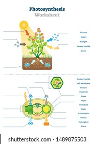 Photosynthesis worksheet vector illustration. Educational blank oxygen produce process scheme template. Sunlight and carbon dioxide ecosystem printable test material diagram for biology school teacher