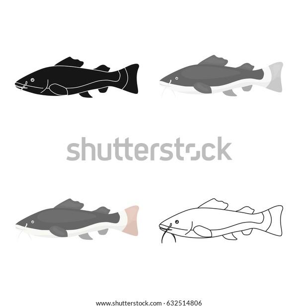 Phractocephalus hemioliopterus fish icon cartoon. Singe aquarium fish icon from the sea,ocean life cartoon.