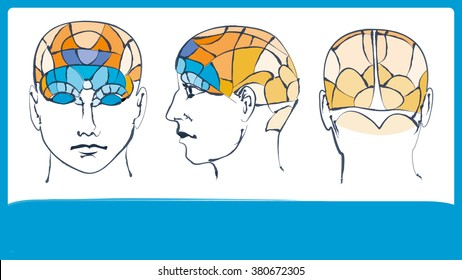 Phrenology. Head brain map. Inphographic. Sketch.