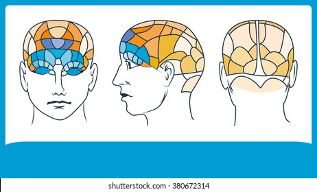 Phrenology. Head brain map. Inphographic.