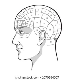 Phrenology retro pseudoscience poster or print design isolated hand drawn vector illustration