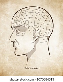Phrenology retro pseudoscience poster or print design over grunge paper background hand drawn vector illustration