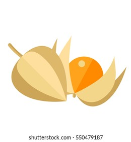 Physalis berries and leaves vector illustration. Superfood groundcherries icon. Healthy detox natural product. Flat design organic food.