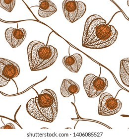 Physalis pattern isolated on white background, vector seamless pattern medical plant. Flawer ornament design texture for paper, package tea, cosmetic, wallpaper, textile, natural