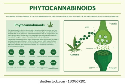 Phytocannabinoids horizontal infographic illustration about cannabis as herbal alternative medicine and chemical therapy, healthcare and medical science vector.