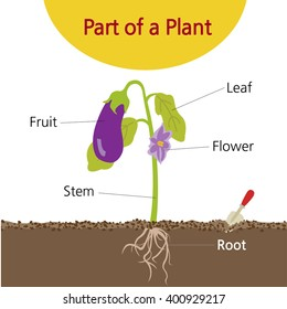 A picture explaining the parts of a plant