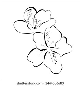 A picture of the flowers of Azalea. Outline drawing