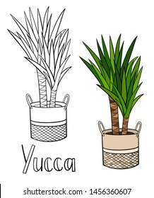 A picture of a house plant in a planter. Vector outline illustration drawings of coloured indoor plant in a basket isolated on a white background with a handwriting caption. Yucca plant