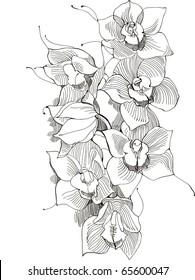 picture orchid,monochrome image