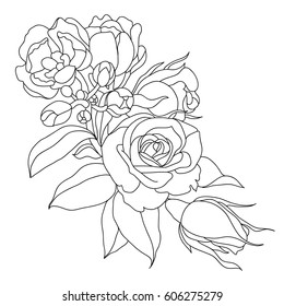 Picture of peony flowers in lines. Vector