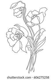 Black and white flowers outline images stock photos vectors picture of poppy flowers in lines vector mightylinksfo Gallery