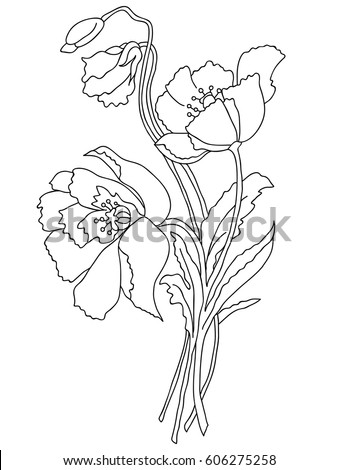 Picture Poppy Flowers Lines Vector Stock Vector Royalty Free