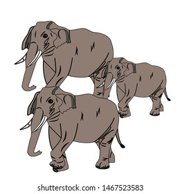 The picture shows three elephants, the rest of the elephants go. Vector drawing for zoo, baby illustration.