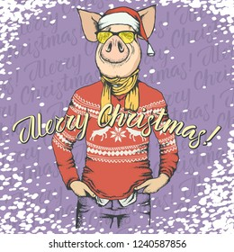 Pig Christmas and New Year vector concept. Illustration of pig in human suit celebrating. Lettering Merry Christmas