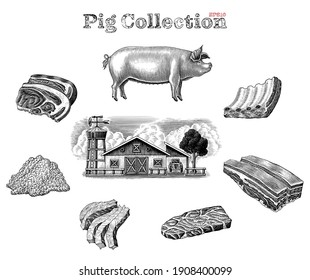 Pig collection hand draw vintage engraving style clip art isolated on white background