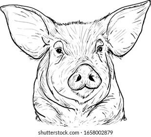 A pig face. Hand drawn vector illustration.