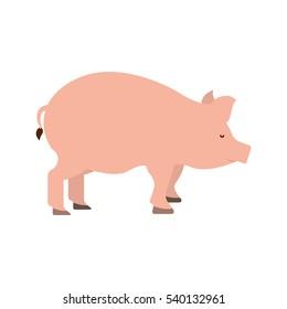 pig farm animal isolated icon vector illustration design