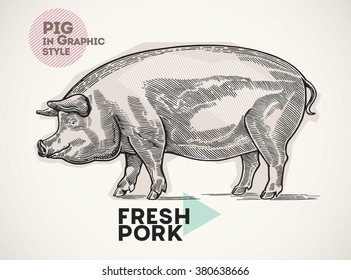 Pig in the  graphic style, drawn by hand.