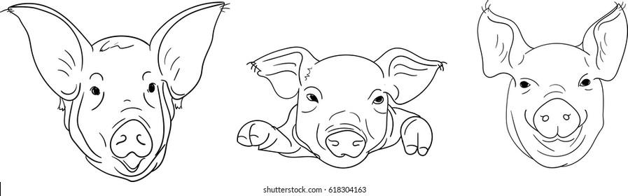 Pig. Head. Emblem.