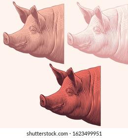 Pig head in profile. Design set. Art detailed editable illustration. Vector vintage engraving. Isolated on light background. 8 EPS