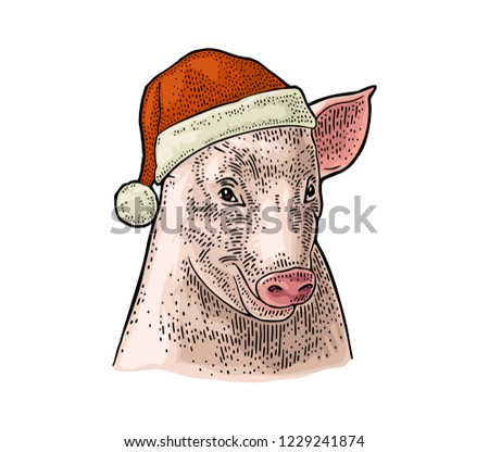 Pig Head Santa Claus Hat Vector Stock Vector (Royalty Free ...