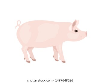 Pig isolated on white background. Vector illustration of farm animal in cartoon simple flat style.