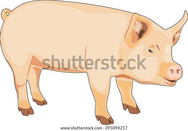 pig-isolated-on-white-vector-600w-395094