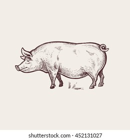 Pig. Series of farm animals. Graphics, hand drawing. Sketch. Vintage engraving style. Design for packaging agricultural products, signage, advertising farm products shops