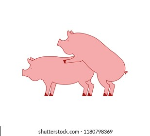 Pig sex. Piggy intercourse. Pigs isolated. Farm Animal reproduction