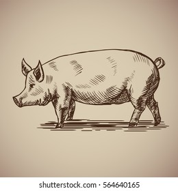 Pig in sketch style. Vector illustration. Drawn by hand. Farm animals. Livestock