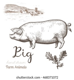 Pig-2. Vector illustration of pig and farm landscape in graphic style, hand drawing illustration