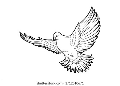 Pigeon or Dove flying line art or sketch for icon, logo, poster, banner, pattern, peace symbol, bird wings, love Valentines card, wedding, Victory memorial day. Vector free flight animal collection